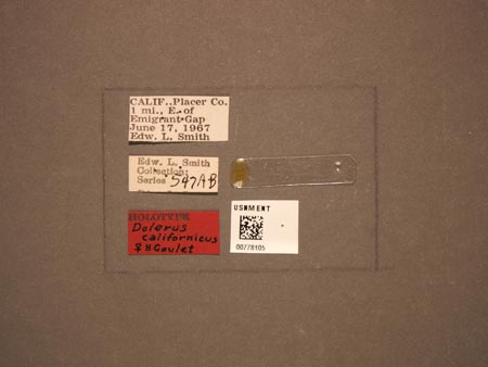 778105_Dolerus_californicus_Goulet_labels.jpg