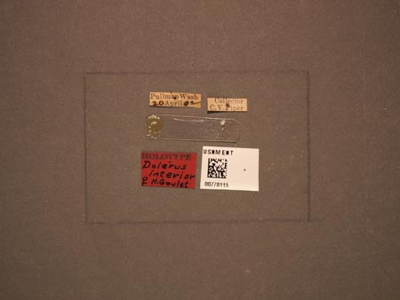 778115_Dolerus_interior_Goulet_labels.jpg