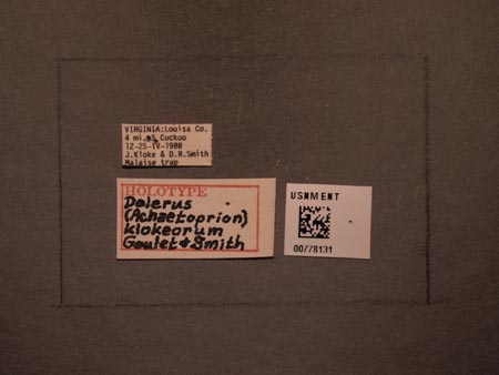778131_Dolerus_klokeorum_Goulet_Smith_labels.jpg