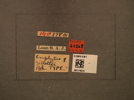 779035_Emphytus_gillettei_Rohwer_labels_edRO.jpg
