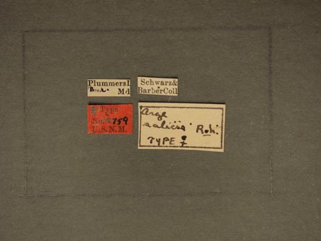 779480_Arge_salicis_Rohwer_labels_edRO.jpg
