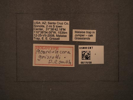 779700_Acordulecera_gisselli_Smith_labels_edRO.jpg