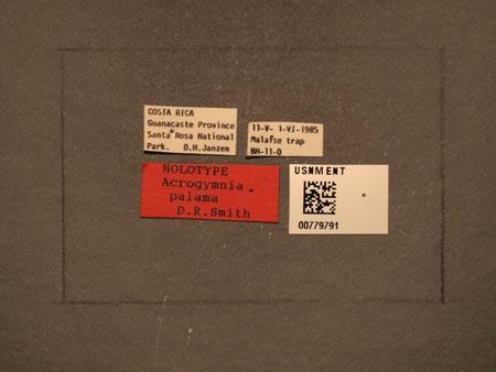 779791_Acrogymnia_palama_Smith_labels_edRO.jpg