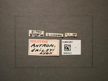 802025_Antron_daileyi_Lyon_labels.jpg