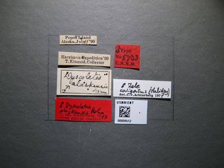 809512_Dyscoletes_alaskensis_Ashmead_labels_edRO.jpg