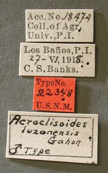 Acroclisoides_luzonensis_label_small.jpg