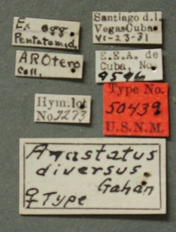 Anastatus_diversus_label_small.jpg