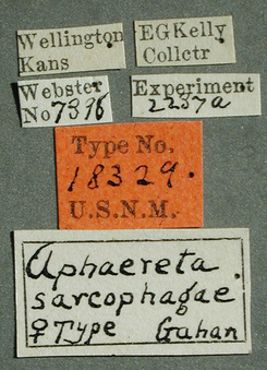 Aphaereta_sacrophagae_label_small.jpg