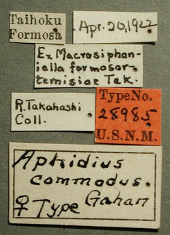 Aphidius_commodus_label_small.jpg