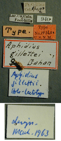 Aphidius_gillettei_label_small.JPG