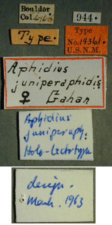 Aphidius_juniperaphis_label_small.JPG