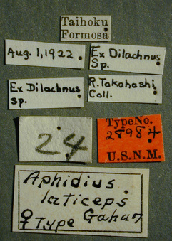 Aphidius_laticeps_label_small.jpg