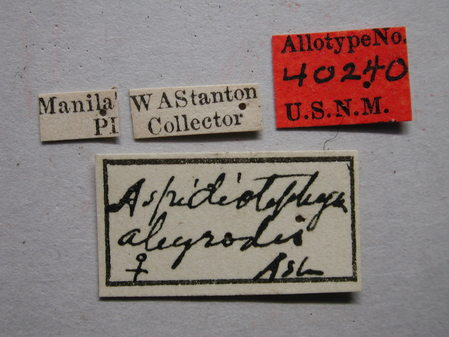 Aspidiotiphagus_aleyrodis_labels.jpg