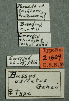 Bassus_usitatus_label_small.jpg