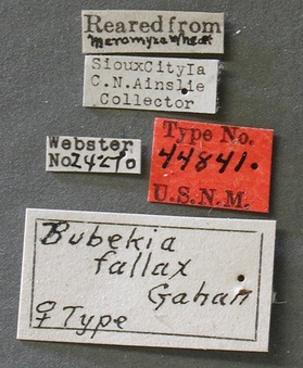 Bubekia_fallax_label_small.jpg