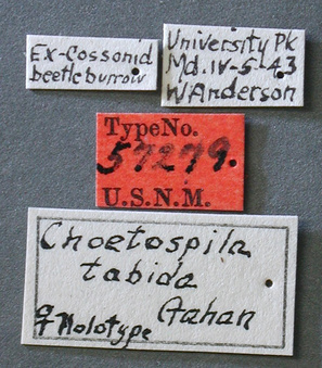 Choetospila_tabida_label_small.jpg