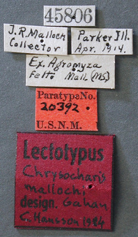 Chrysocharis_mallochi_label_small.jpg
