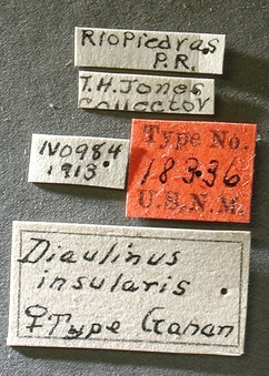 Diaulinus_insularis_label_small.jpg