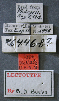 Eupelminus_metiori_label_small.jpg