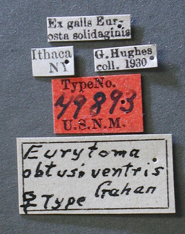 Eurytoma_obtusiventris_label_small.jpg