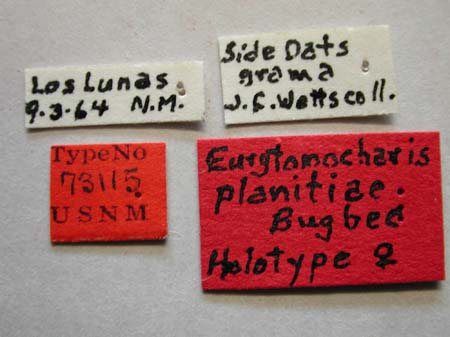 Eurytomocharis_planitiae_labels.jpg