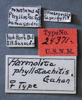 Harmolita_phyllostachitis_label_small.jpg